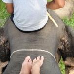 Thailand Dec06 320